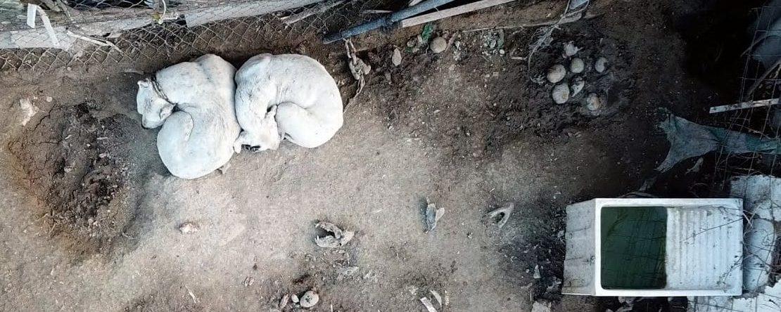 Perros maltratados hasta su muerte en Murcia