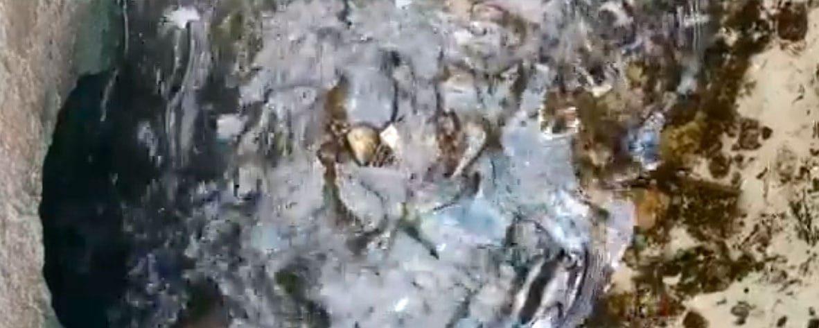 Nuevos vertidos diarios de nitratos en el Mar Menor